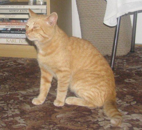 Dnes jsem u bytového domu na Žeranovské ulici 21 - 25 našel krásného, ale  vyhublého kocoura. Pokud ho na fotce poznáte, rád vám ho vrátím. 67e240ee997d
